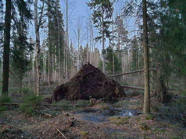 Auringonlaskun jälkeen automaattisilla oletusasetuksilla otettu kuva ei näytä hämärältä, mutta kohinaa on huomattavasti ja varhaiskeväinen metsä näyttää elottomalta.