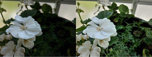 HDR-tila tuo monissa tilanteissa lisää väriä kuviin. Vasemmalla otettu kuva ilman HDR:ää, oikealla otettu kuva HDR:n kanssa.